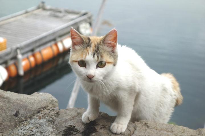 青島のねこ1