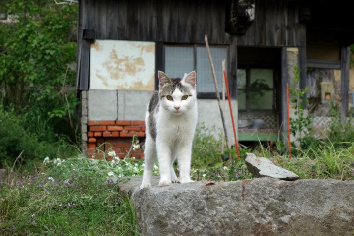 青島のねこ17