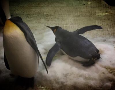 空飛ぶ夢をみるペンギン