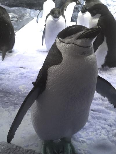 そっと目を閉じるペンギン