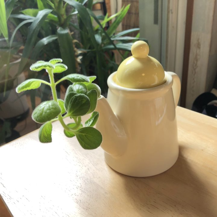 店内のテーブルの植物