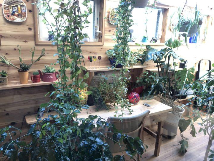 店内から見えるかわいい植物スペース
