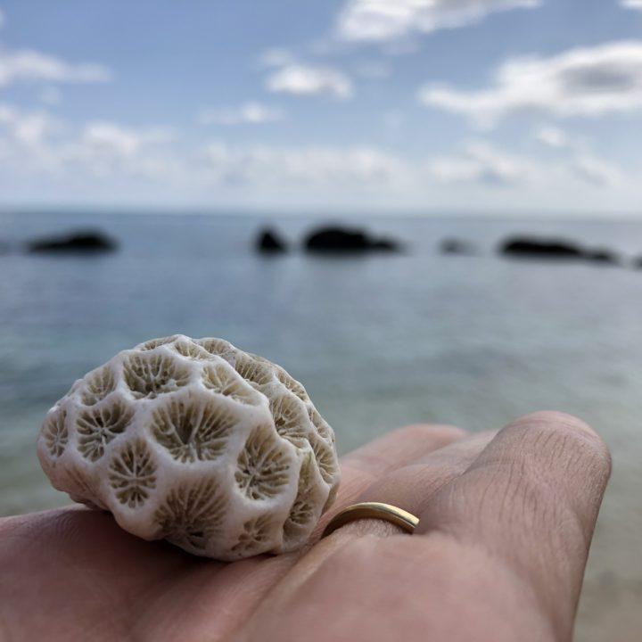 白保海岸のサンゴ