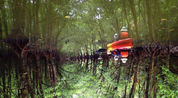 水面に映るマングローブの森