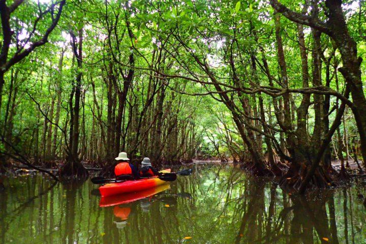 マングローブの森でカヌー