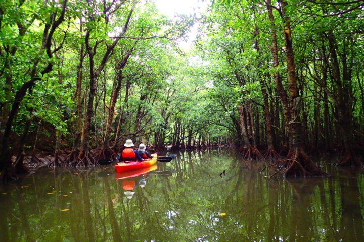 水面に映るマングローブの森(オリジナル)