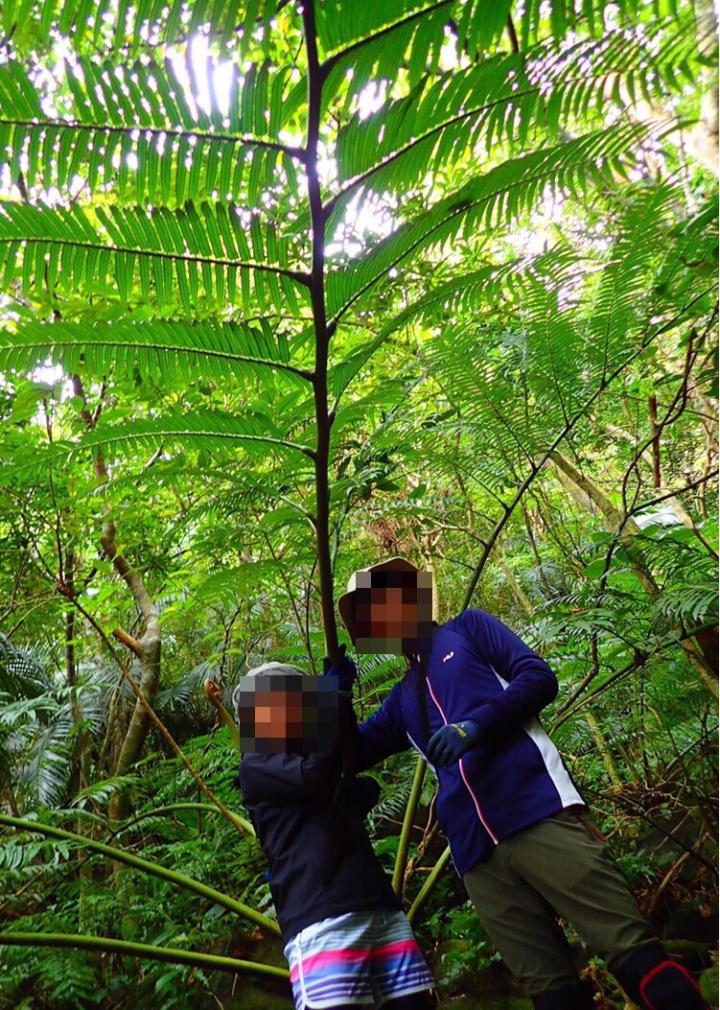 ジャングルの巨大シダ植物