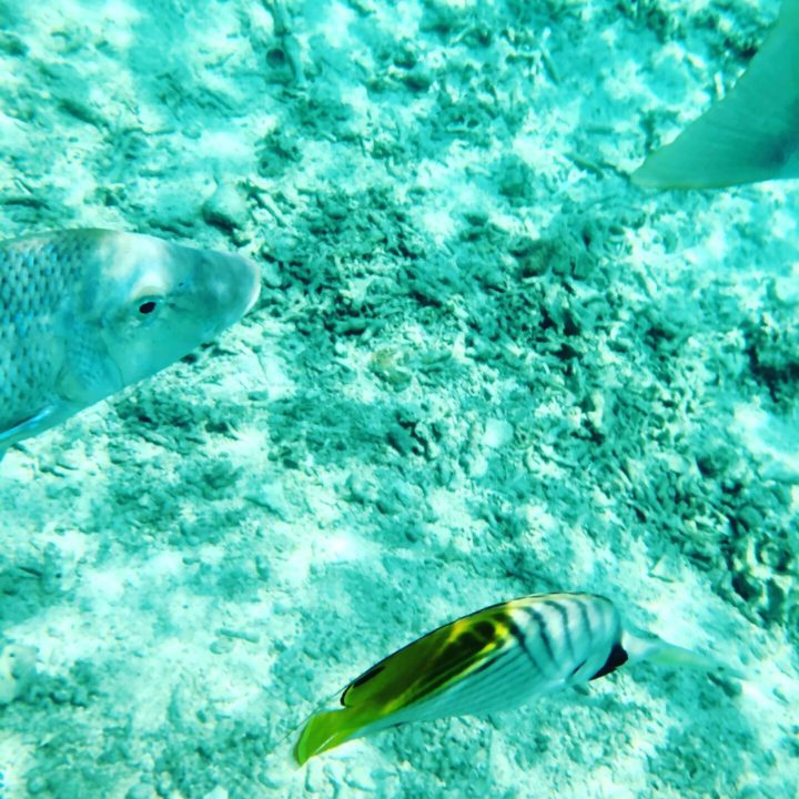 水納ビーチの熱帯魚