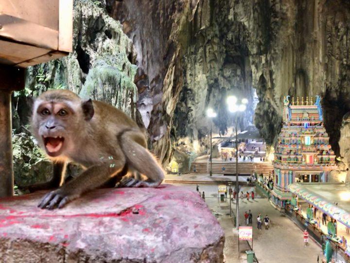 バトゥ洞窟のサル3
