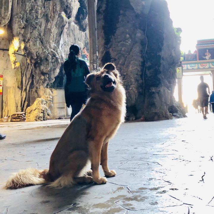バトゥ洞窟の野犬