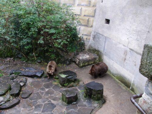 チェスキークルムロフ城のクマ