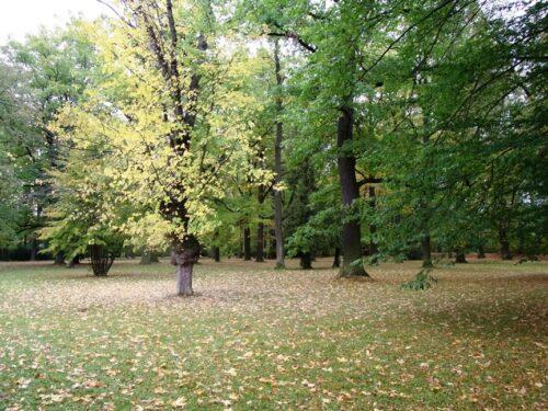チェスキークルムロフ城の庭(森?)